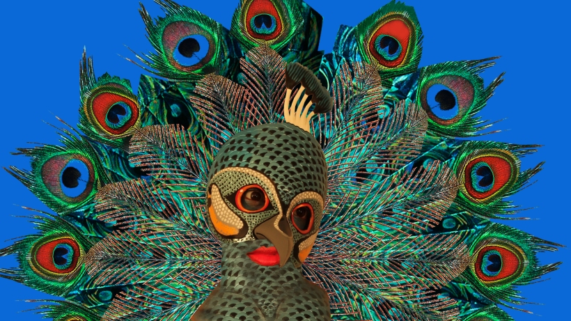 peacock_00035